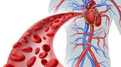 vasos sanguíneos, venas, arterias, venas varicosas, flebitis ...